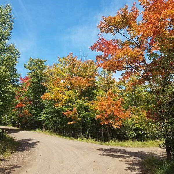 orange maples highlight a dirt road intersection