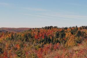 More Maple Hillsides