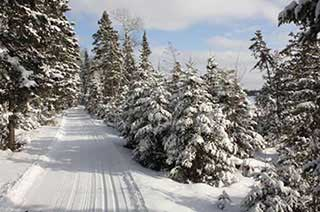 Ski Trails-Central Gunflint Trail System