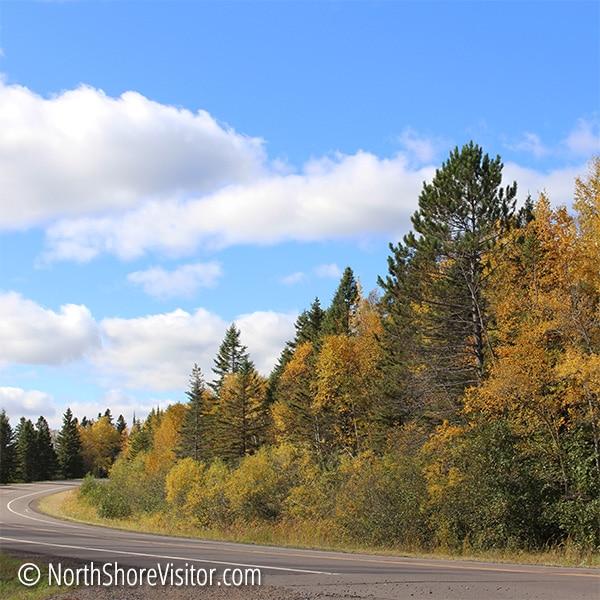 golden birch and deep green pine line scenic highway 61