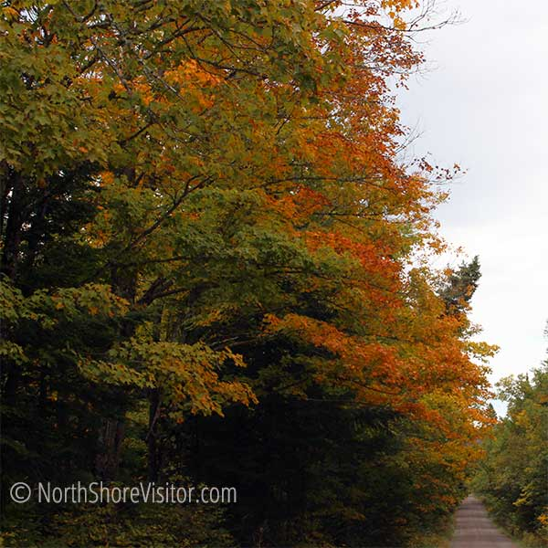 maples turning orange along heartbreak ridge drive north shore