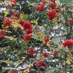 fall-colors-28sep-drive3mtnash