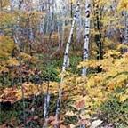 Superior Hiking Trail, Split Rock River Loop