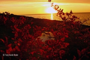 Lake Superior autumn morning