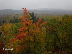 Misty fall colors