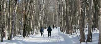 Ski & Bike Trails-Norpine