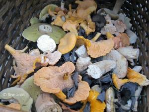 North Shore fungi