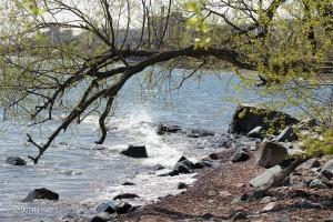 Shoreline, start of Scenic 61