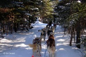 Dog sledding, Gunflint Trail