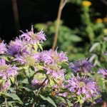 wiildflowers