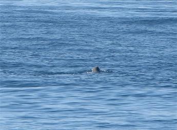 whale near big bay lake superior's north shore
