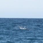 whale splash lake superior