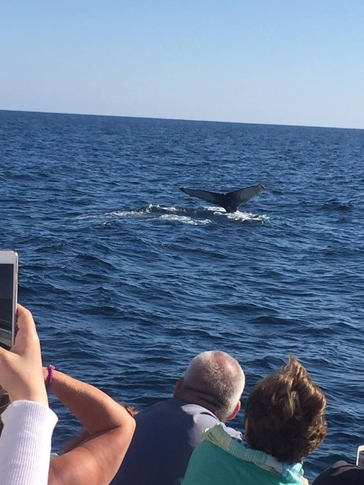 people on boat tour watch whale tail descend into lake superior