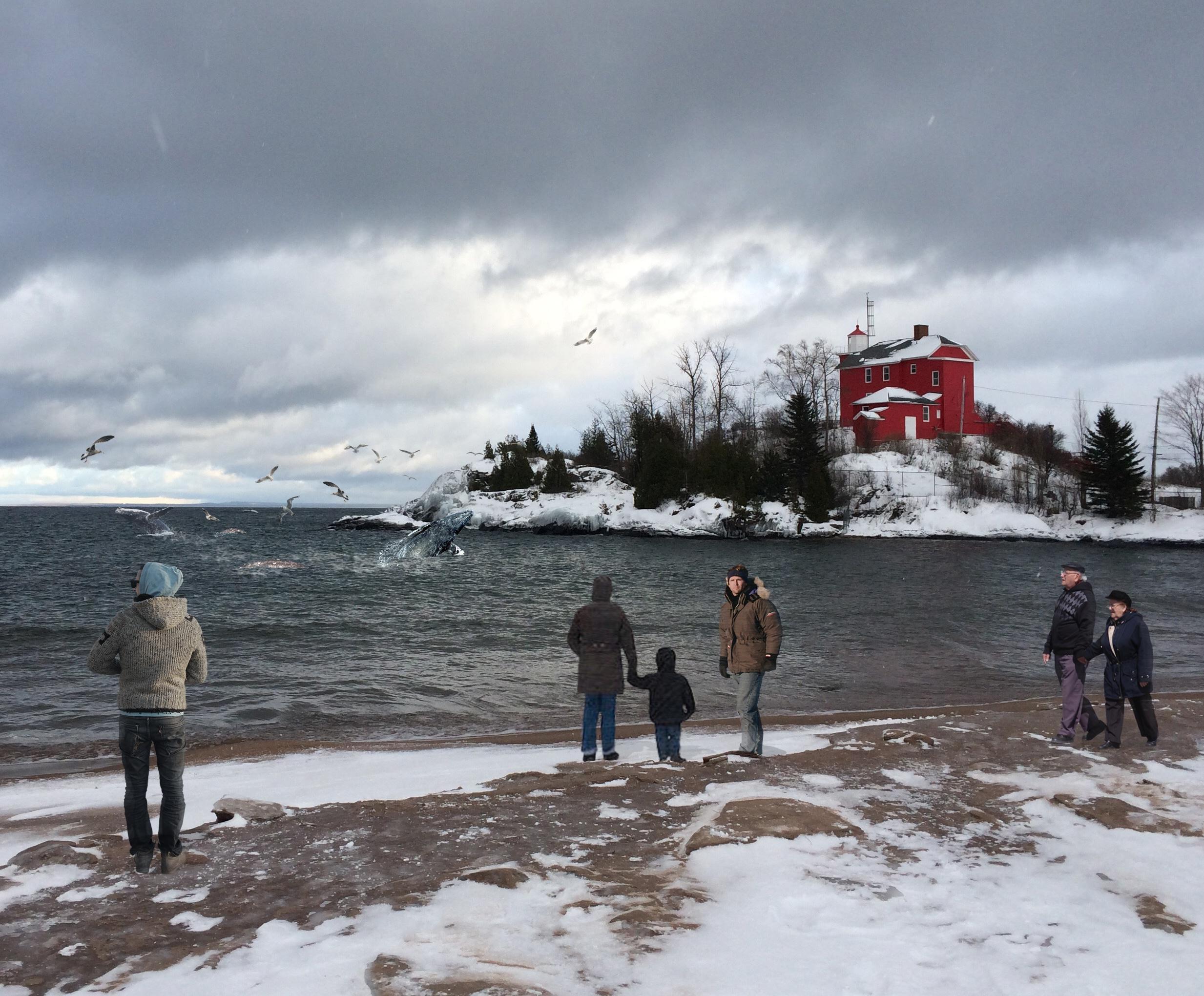 onlookers watch whale offshore near marquette mi