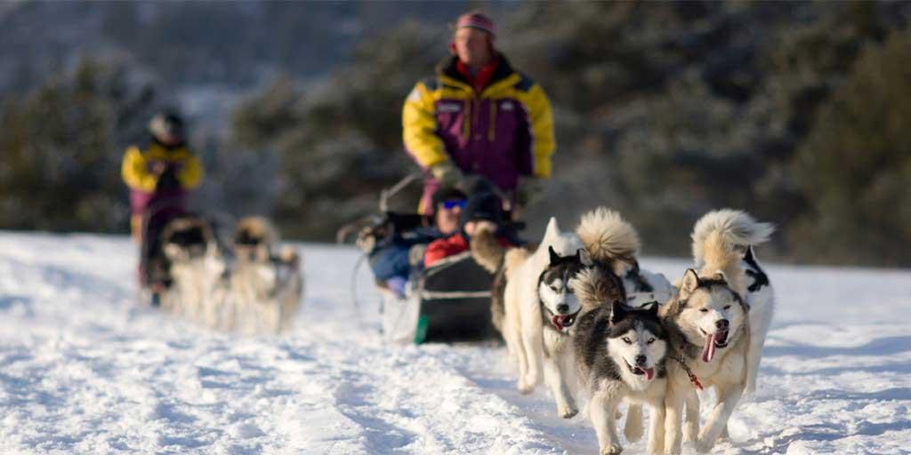 dog sled north shore