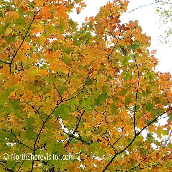 Fall Color Guided Hike