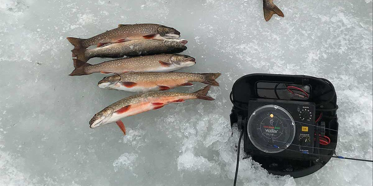 five splake and a depth finder ice fishing