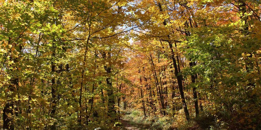 best fall color tours north shore