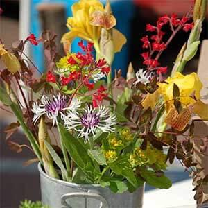 fresh cut flowers at north shore farmer's markets