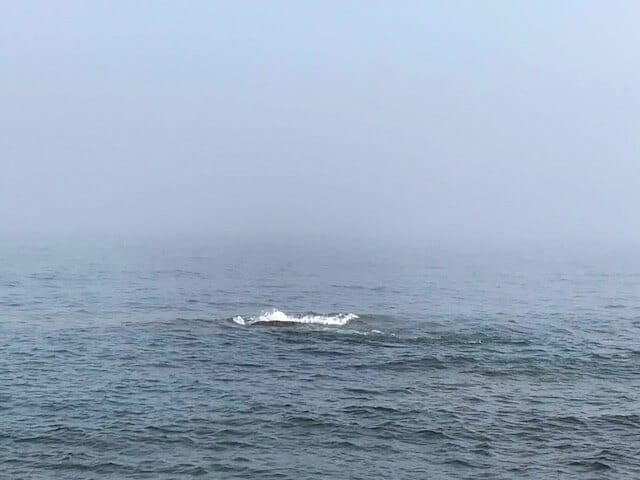 whale back just breaking the surface of lake superior
