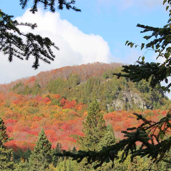 bright maple covered hillside with rock face