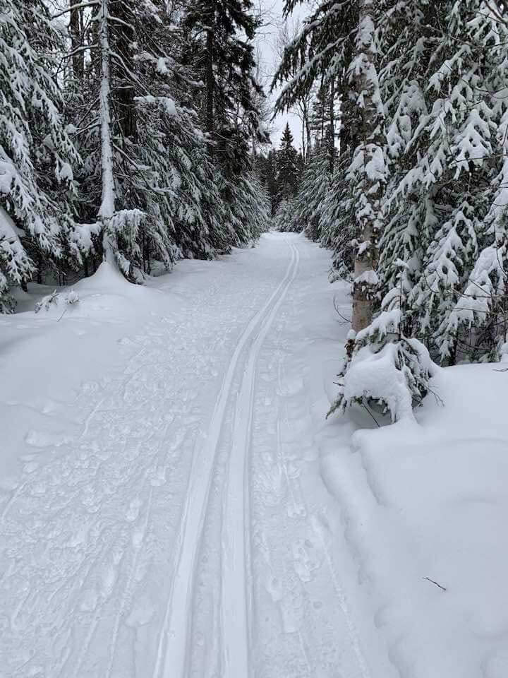 Ski Trail-George Washington Pines