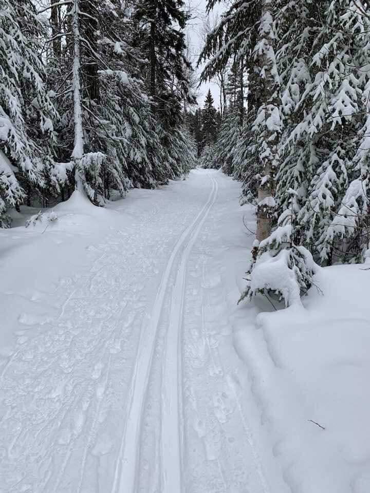 Ski Trail-George Washington Pines