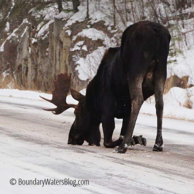 Moose Lick Road Salt
