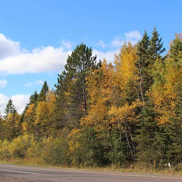 paved road fall colors between two harbors and beaver bay mn