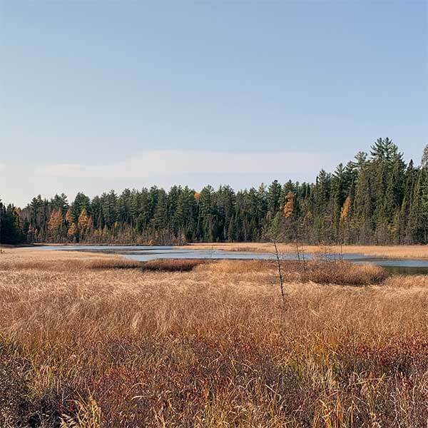 burnished grasses surround the lima grade swamp while deep pines look on