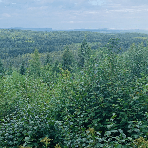 Forest near the Grand Portage