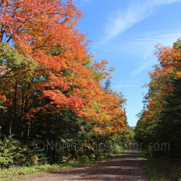 heartbreak hill maples near Tofte