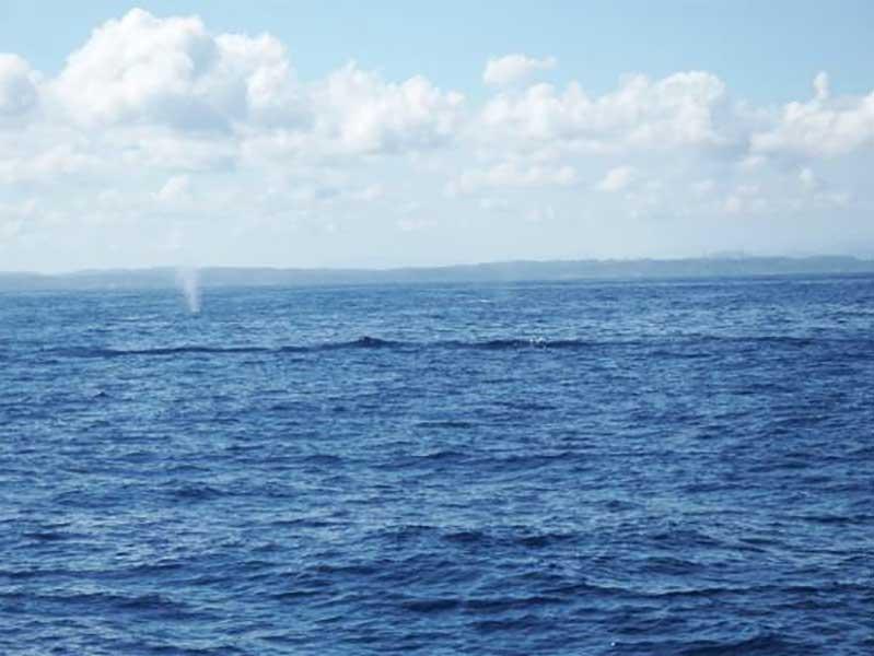 spouting-whale