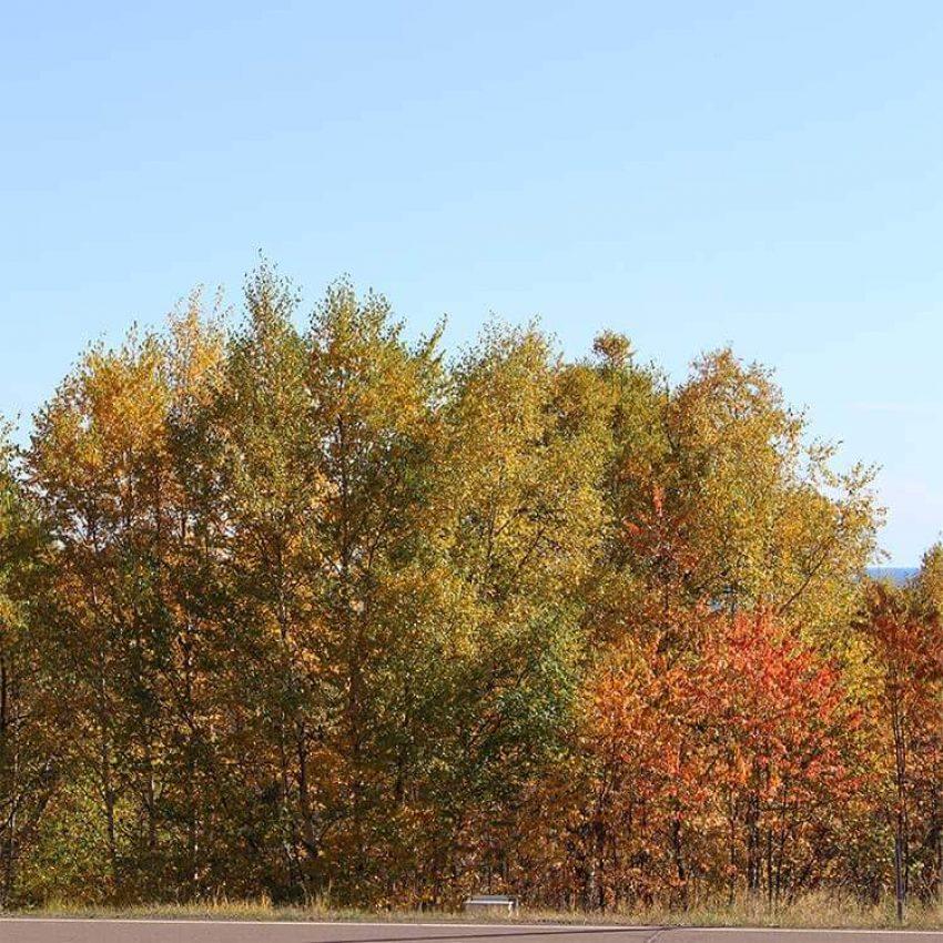 highway 61 trees turning orange near lutsen