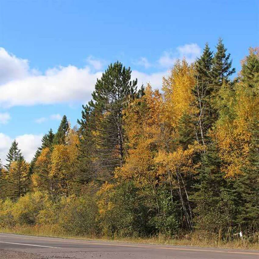 paved roaad fall colors between two harbors and beaver bay mn