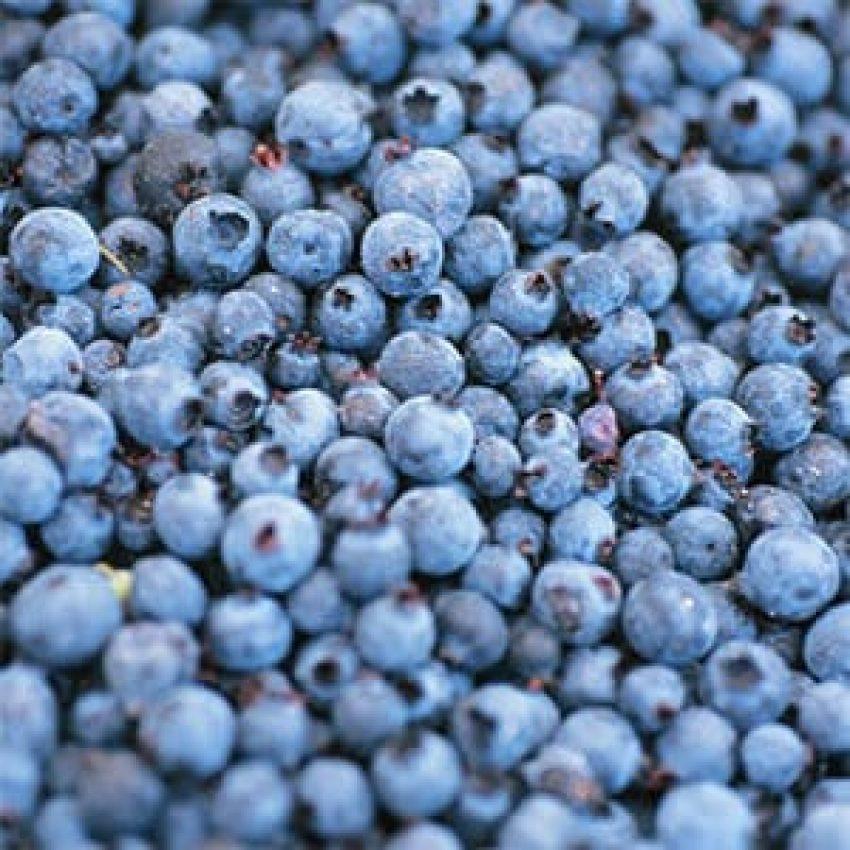 blueberry hill hike gunflint trail
