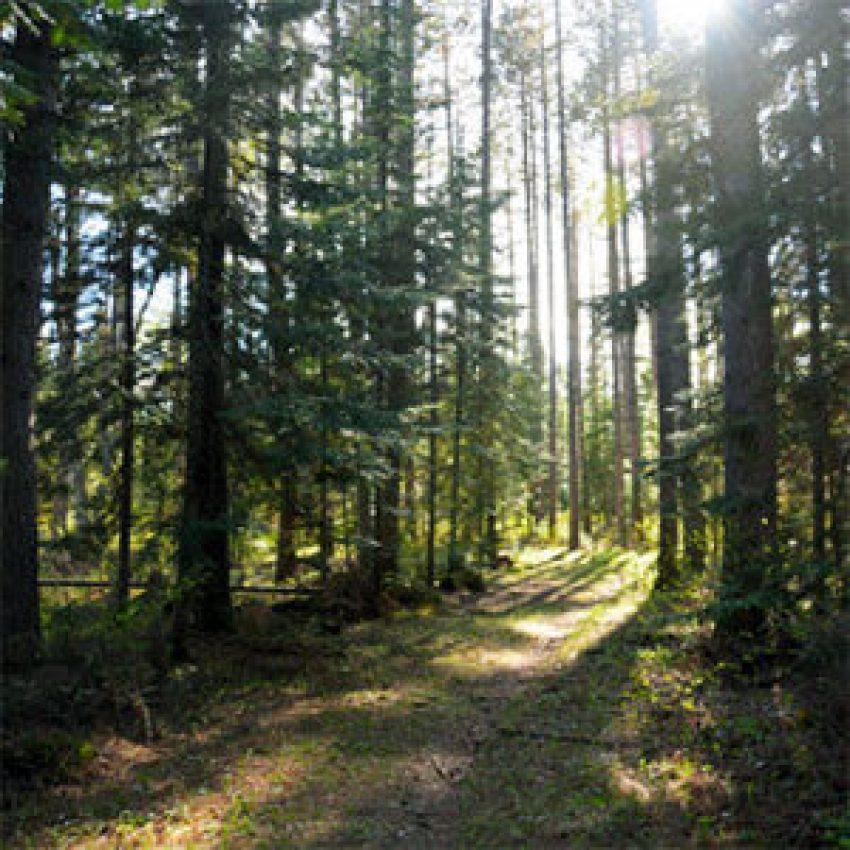 gunflint trail hike