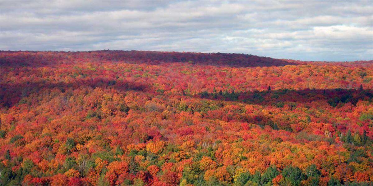fall color report north shore