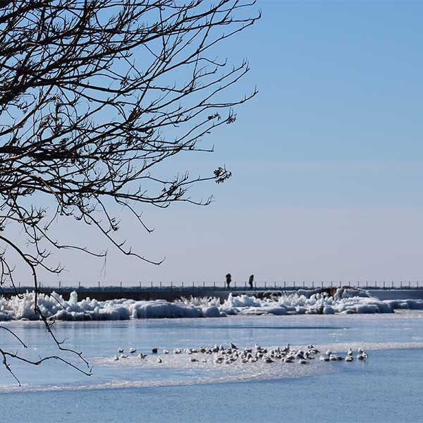 gulls on a float of ice in the grand marais harbor