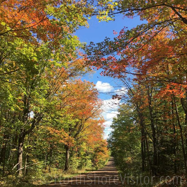 maple fall colors