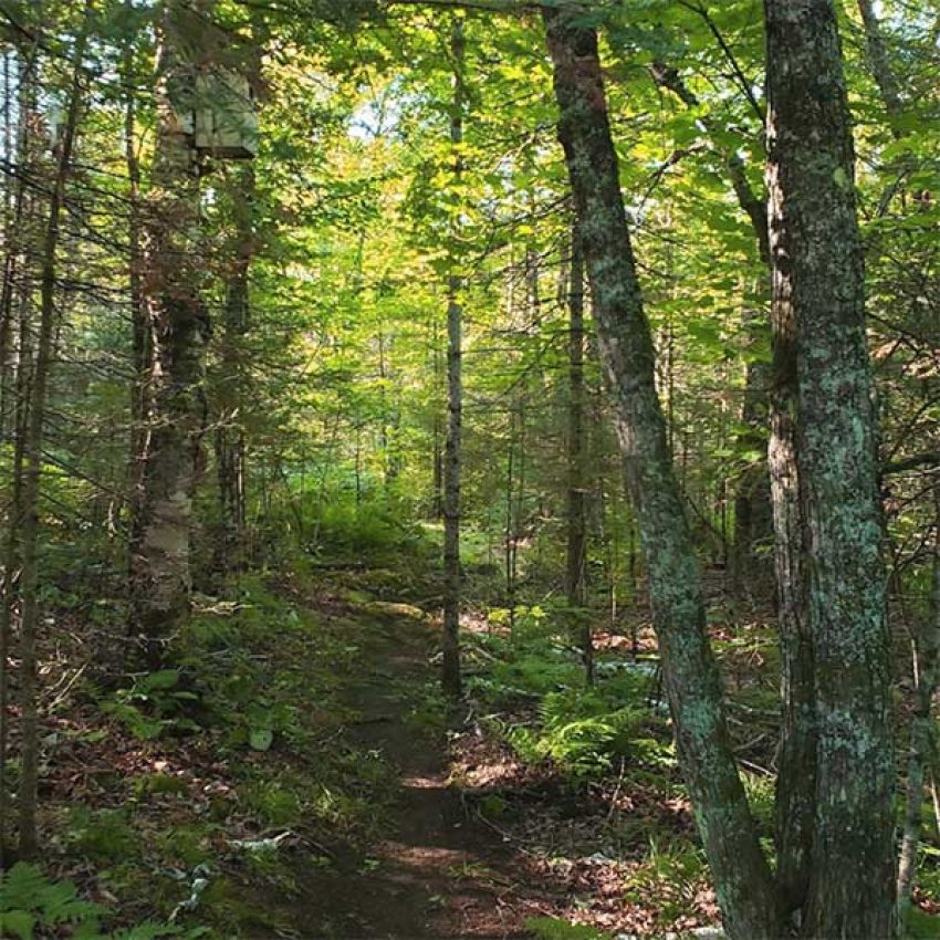 hard pack single track mountaain bike trail through summer forest