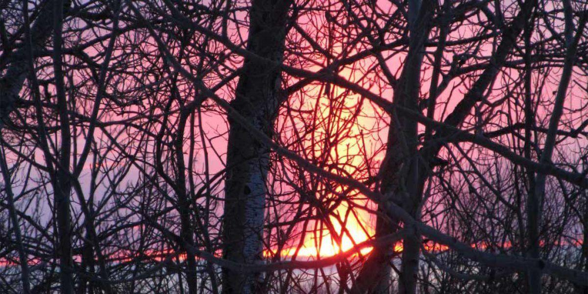 pink purple sunrise through maze o leafless tree branches