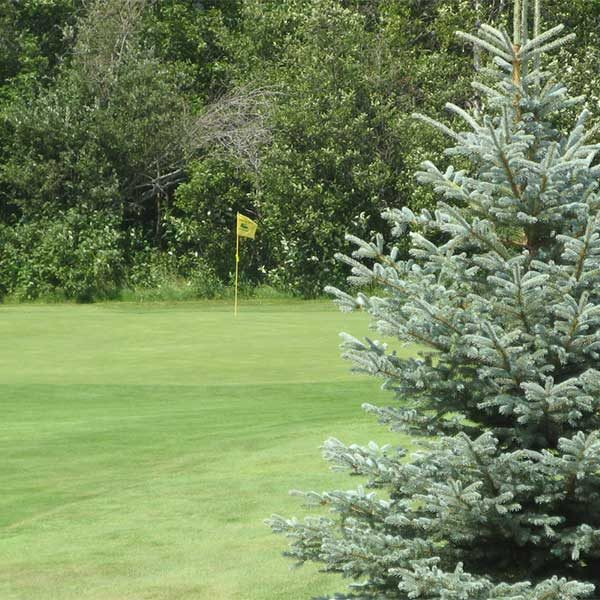 green and spruce tree on north shore golf course