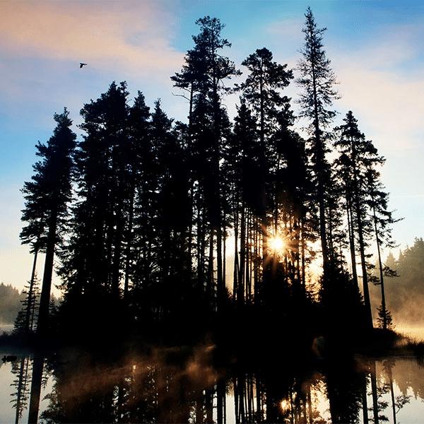 morning mist rises from wilderness lake gunflint trail